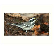 Warbler, Black-throated Gray Art Print