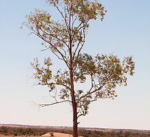 Outback Tree - Northern Territory by Matthew Lane