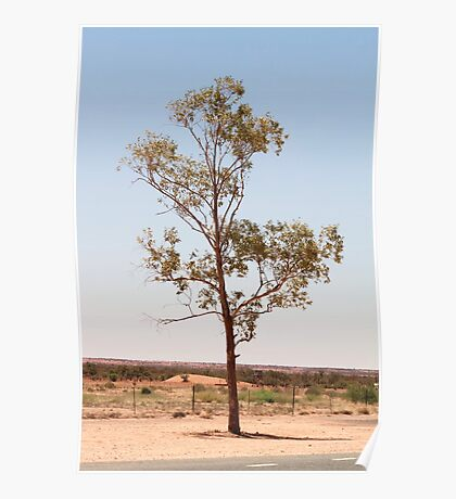 Outback Tree - Northern Territory Poster