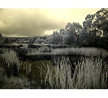 Back to Steiglitz - the darkIR mIRe does inspIRe Photographic Print