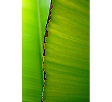 Banana Leaf in Abstract 0525 Photographic Print