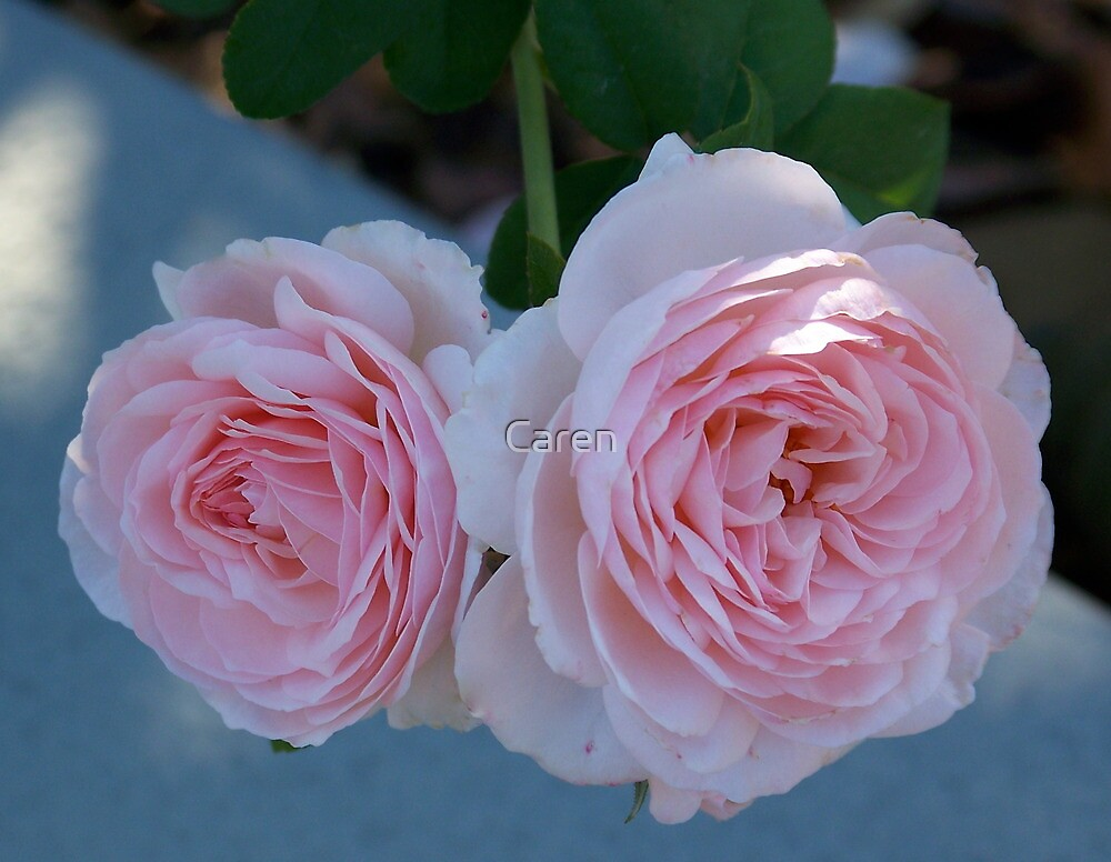 Two Pink Roses are Better than One by Caren