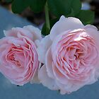 Two Pink Roses are Better than One by Caren Grant