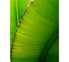 Banana Leaf in Abstract 0529 Photographic Print