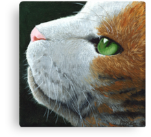 Max - the cat - portrait Canvas Print