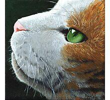 Max - the cat - portrait Photographic Print