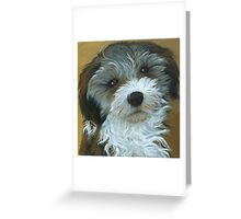 Chico - dog portrait Greeting Card