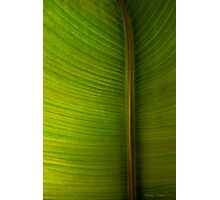 Banana Leaf in Abstract 0528 Photographic Print