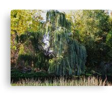 Willow Canvas Print