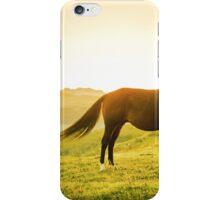 Horse grazing the grass at sunrise iPhone Case/Skin