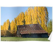 Old Barn and Yellow Trees Poster