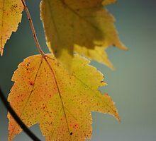 Autumn Beauty  by Michelle BarlondSmith