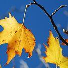 Ahhh Autumn... by Catherine Davis