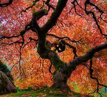 Japanese Maple Tree by davidgnsx1