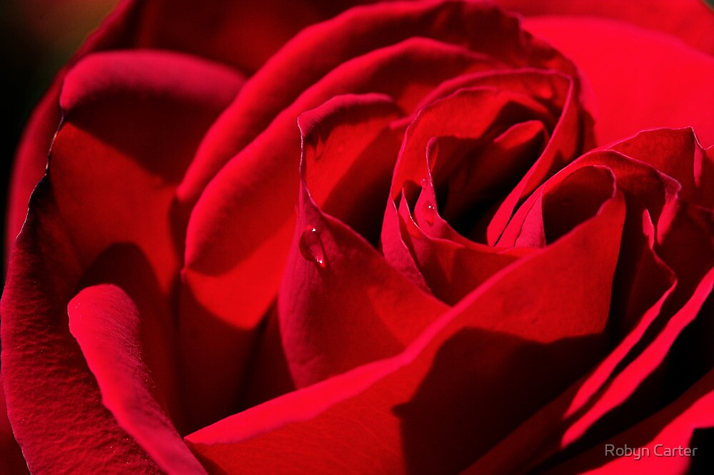 The Rose of Love by Robyn Carter