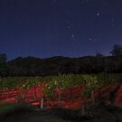 Midnight in the Garden of Good and Evil by MattGranz