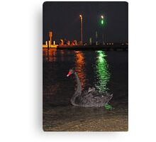 Black Swan At Night  Canvas Print