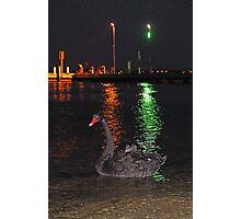 Black Swan At Night  Photographic Print