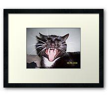 Cats Fangs Framed Print