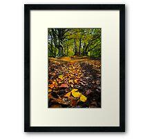 Golden Leaves of Autumn Framed Print
