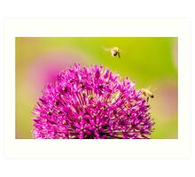 flower and bee Art Print