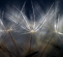 Dandelion Glow by yolanda