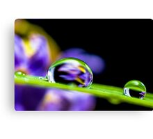 Water Droplets on a Blade of Grass Canvas Print