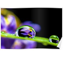 Water Droplets on a Blade of Grass Poster