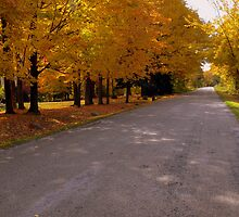 Autumn Drive by Kathy Weaver