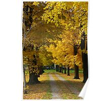 Mother Natures Golden Arches Poster