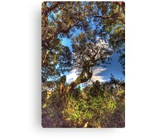 Things Are Looking Up - Gladesville , Sydney - The HDR Experience Canvas Print