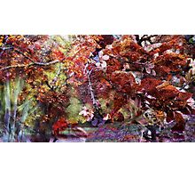 The Bright Warmth of Autumn Photographic Print