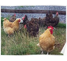 A brood of hens Poster