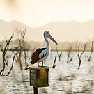 A Pelican at Sunset by AlyssaSbisa