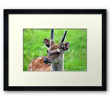 GO AWAY  FLYS Framed Print