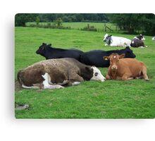 Cows in a field Canvas Print