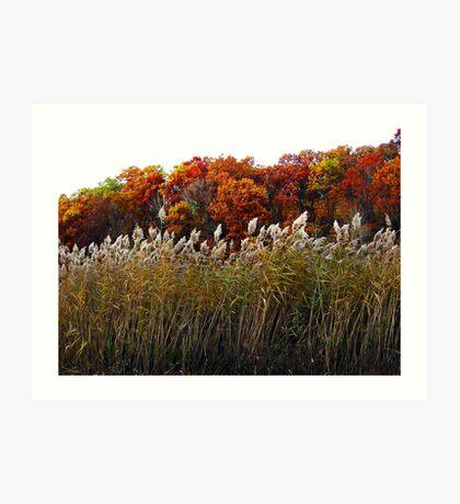 More Colors of Autumn Art Print