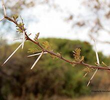Africa's bushveld by Elizabeth Kendall