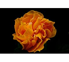 mexico rose - color filter Photographic Print