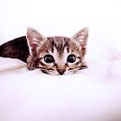 Sweet Kitty by aelyn