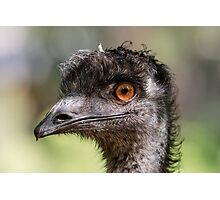 Mr. Emu Photographic Print
