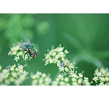 another fly Photographic Print