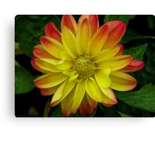 Yellow And Red Dahlia Canvas Print