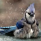 blue jay bath by jaki good