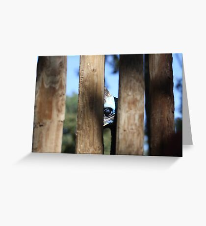 Southern Cassowary Greeting Card