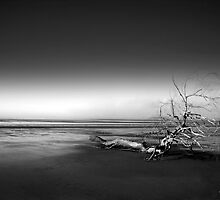 Lone Tree by Dave Hayward