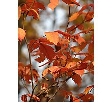 Colors Of Autumn @ Lacey-Keosauqua State Park  Photographic Print