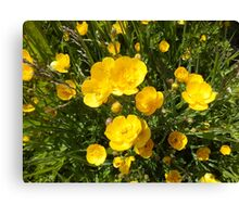 Butter Me Up Buttercups Canvas Print