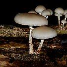 funghi by Heike Nagel