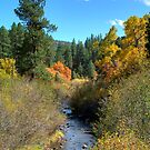 Fall in the Jemez by Mitchell Tillison